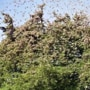 News updates from Hindustan Times: Delhi issues advisory to tackle locust threat as capital braces for attack and all the latest news
