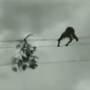 Man pulls off daredevil act, walks on high-tension wires to remove tree branch