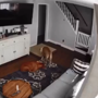 Dog does this to take care of his sick brother, video is adorable