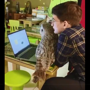 Man hangs out with owl while working on laptop. Watch