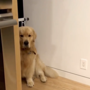 Doggo popping out to check on hooman makes for the cutest watch