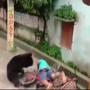 Wild bear attacks man at residential area in Odisha's Kalahandi