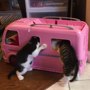 Adorable video of kittens 'carjacking' a Barbie van may leave you smiling