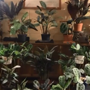 Timelapse video of indoor plants leaves people with thoughts. Watch