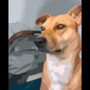 Dog meets anime filter, what follows will make you giggle