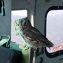 Owl hitches ride on aircraft fighting California wildfires