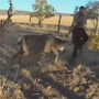 Officers rescue deer stuck in hammock, it charges at one of them. Watch