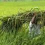 Punjab bills offer little on ground