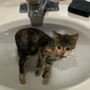 This video of a rescued kitten enjoying its first bath is oddly calming