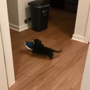 This 'sneakiest shoe stealer on the planet' is probably the cutest too