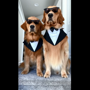 These suited doggos may just take your breath away with their swag