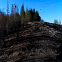 Drones plant trees from sky to speed up wildfire reforestation in US