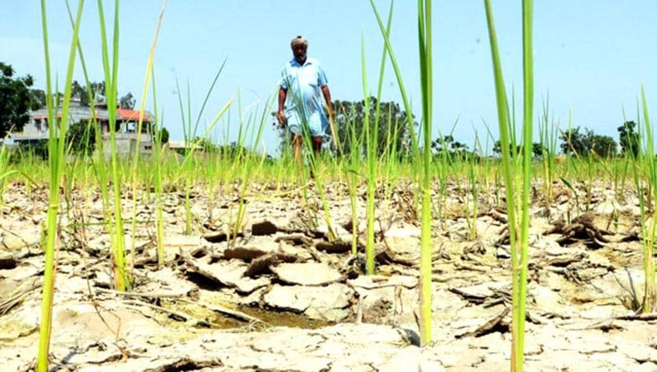 Many farmers across India have committed suicide following drought and crop failure.