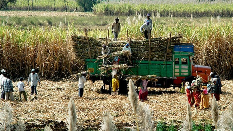 Stats revealed that 2,100 litres of water is used in Maharashtra to produce of a kilogram of sugar against 822 litres in Bihar.