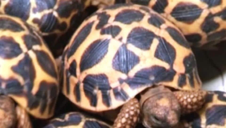 turtle,smuggler,interpol