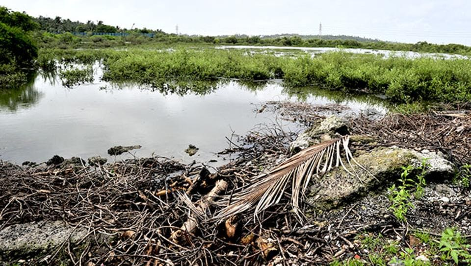 Studies have shown that the city is losing its mangrove forests.