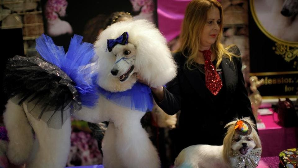 The fifth edition of the Mi Mascota (My Pet) fair in Malaga, southern Spain was held on November 26 and 27 this year. (Reuters)