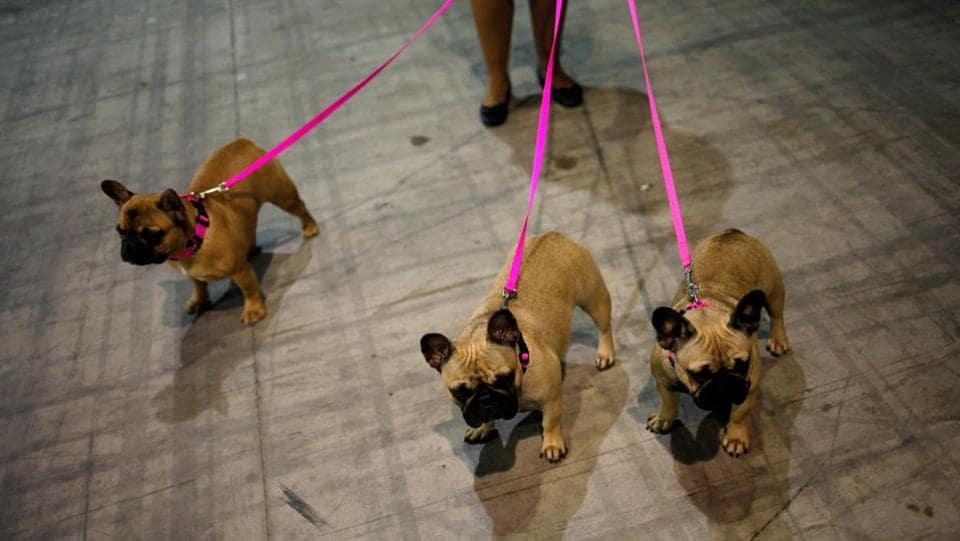 Various rare and exotic breeds of dogs participate in the fair every year, much to the delight of all attendees. (Reuters)