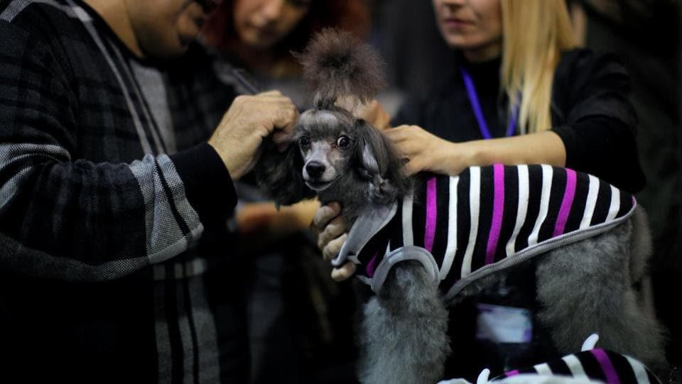 With the welfare of pets at its heart, the fair is a must visit for all dog lovers. (Reuters)