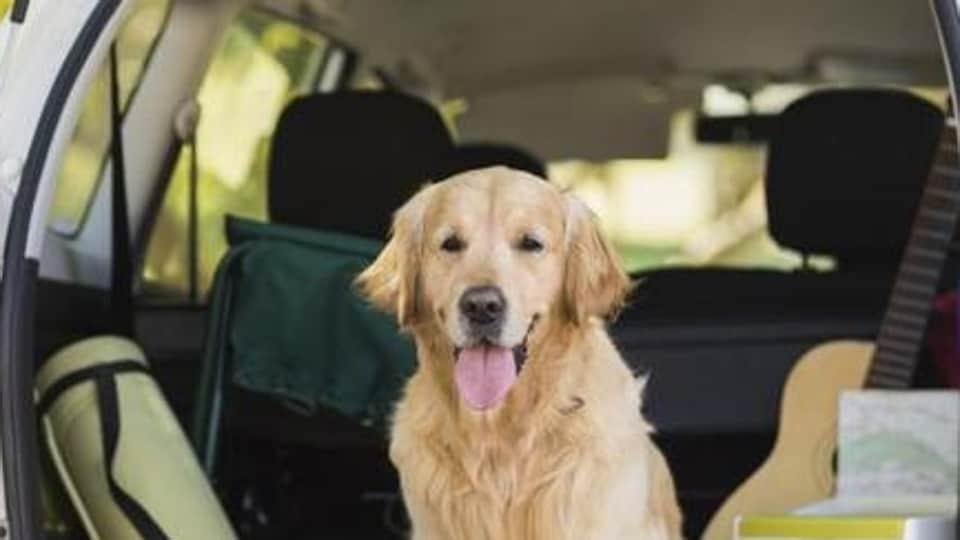 Pet care,Chandigarh UT,Animal ambulance