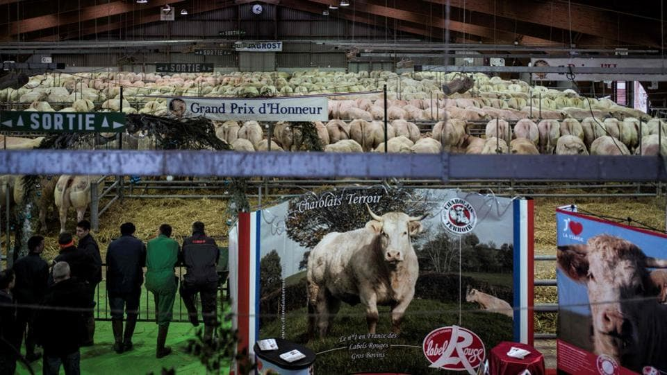 Farmers flock on the opening day of the Festival du boeuf charolais in Charolles, eastern France, on Saturday. (AFP)