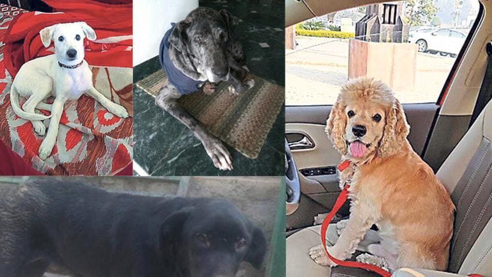 Life is hard for stray and abandoned animals. If you are thinking of getting a pet, here are a few adorable choices.