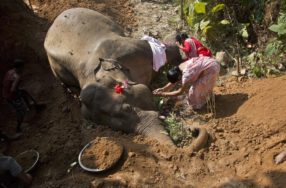 Village women pray near the carcass of a wild Asiatic male elephant at Amgaon, near Gauhati, December 3, 2016