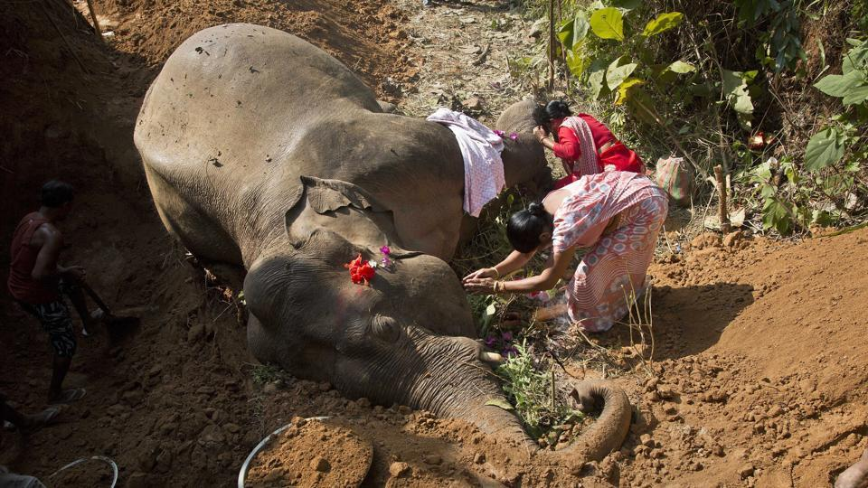 Village women pray by the carcass of a wild Asiatic male elephant at Amgaon in Assam.