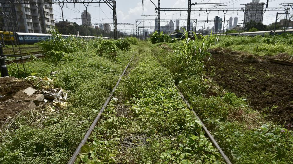 Not on the right track: This railway line at Matunga certainly needs a push in the right direction.  (Arijit Sen/HT PHOTO)