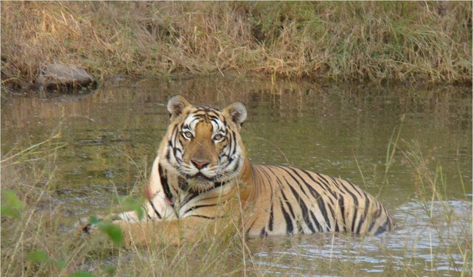 Bandhavgarh Tiger Reserve,Bhopal,National Tiger Conservation Authority