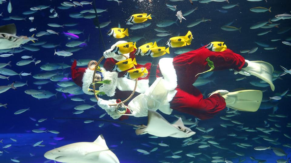 A diver dressed as Santa Claus feeds fish at the annual Christmas event at Tokyo's Sunshine International Aquarium in Tokyo on December 6, 2016. (AP)