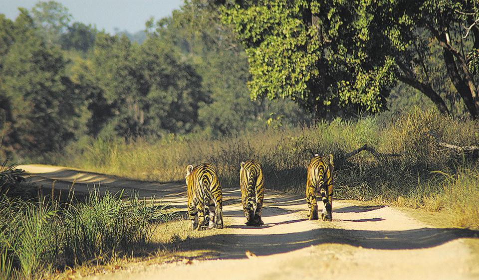 The PIL said forest officers did not seek mandatory permission before erecting the fencing and before setting up tiger safaris.