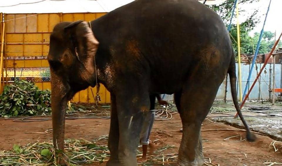 circuses,circus animals,FIAPO