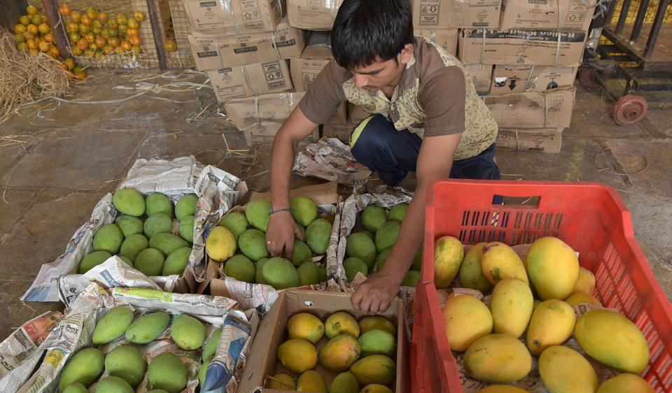 The first arrivals of alphonso are always in great demand and are picked up by retailers for special clients who are ready to pay premium prices for them