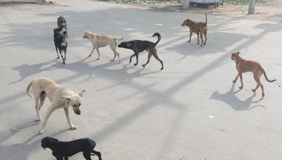 When asked what actions will be taken for the stray dogs, the chief municipal officer said action will soon be taken to remove strays.