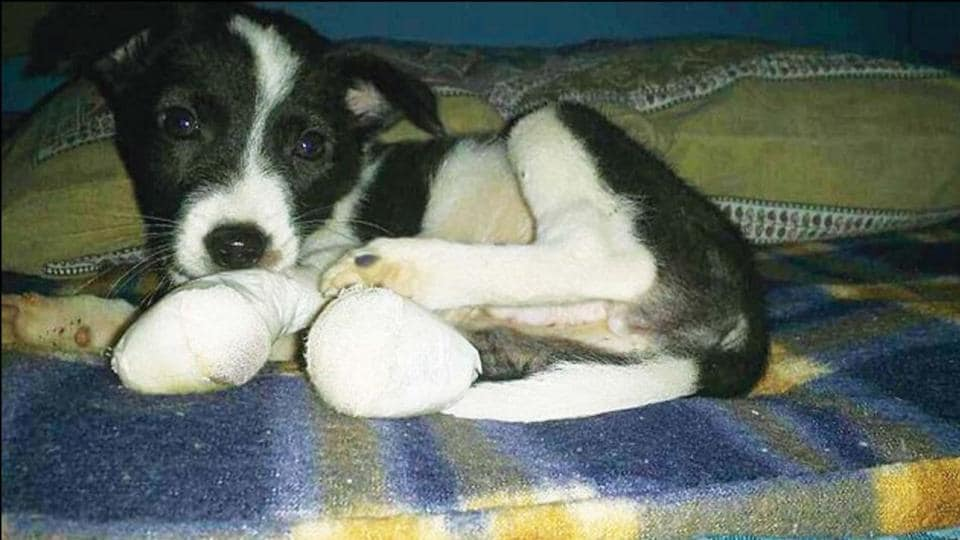 Last week, a Dwarka resident severed a stray puppy's two legs after the canine scratched him.