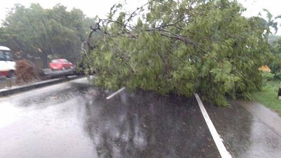 A tree uprooted by heavy winds.