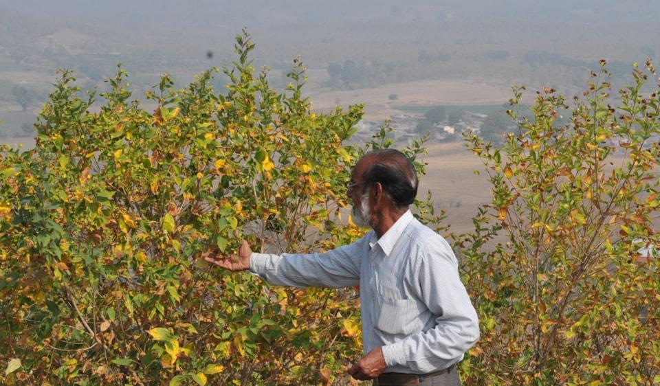 parijat trees,Vindhya mountain range,Harsingar