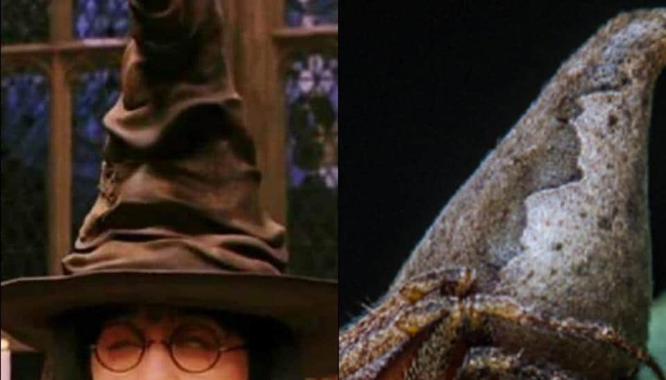 The spider is uniquly shaped like the magical artifact, the Sorting Hat, which features in J K Rowling's Harry Potter series.