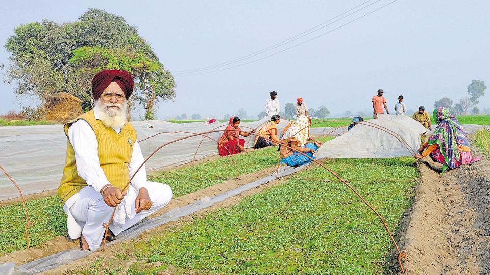Demonetisation,Punjab,Agriculture