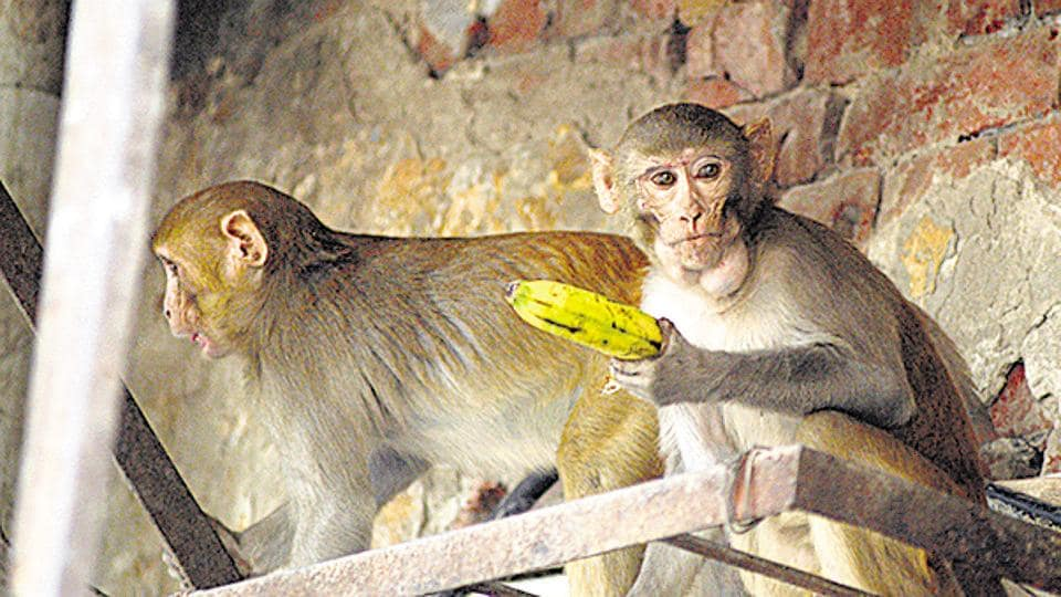 The south agency has once employee to catch monkeys.