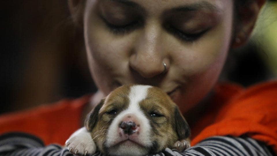 Experts say that pets should be considered a main source of support in the management of long-term mental health problems. (For representation only)