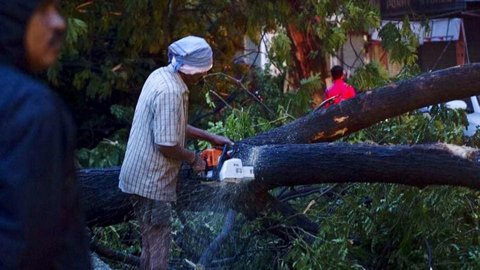 A man saws a tree fallen in Chennai due to the cyclone Vardah on Monday.