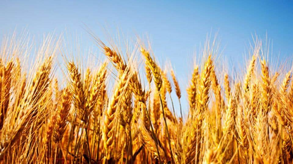 Rabi crop,Demonetisation,Inflation