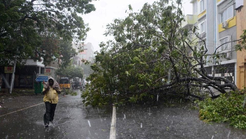 A man walks along a street covered with debris and fallen trees in Chennai as Cyclone Vardah made landfall on Sunday.
