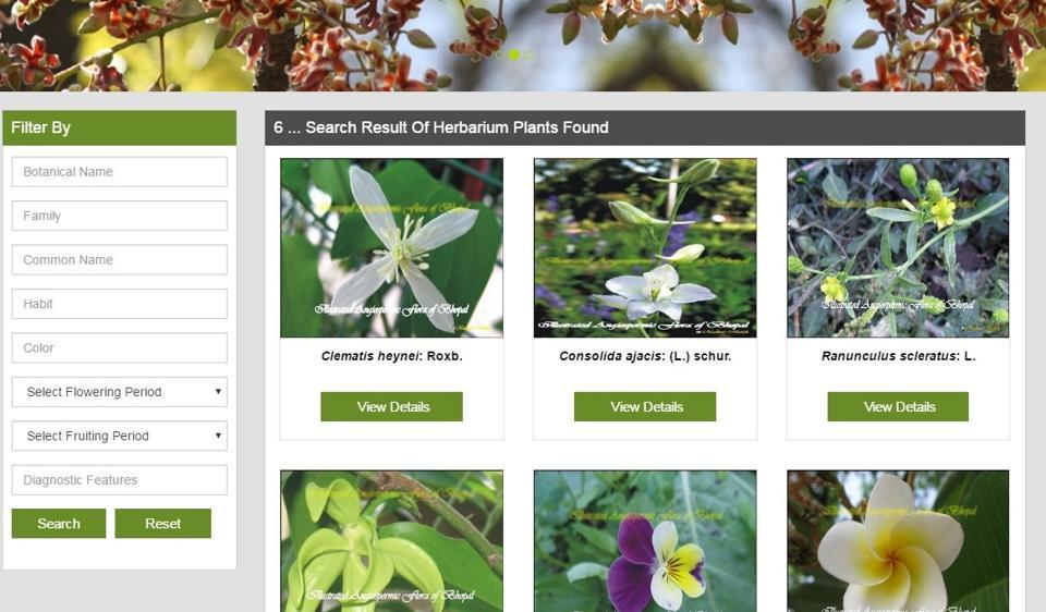 medicinal plant,Madhya Pradesh,MP government