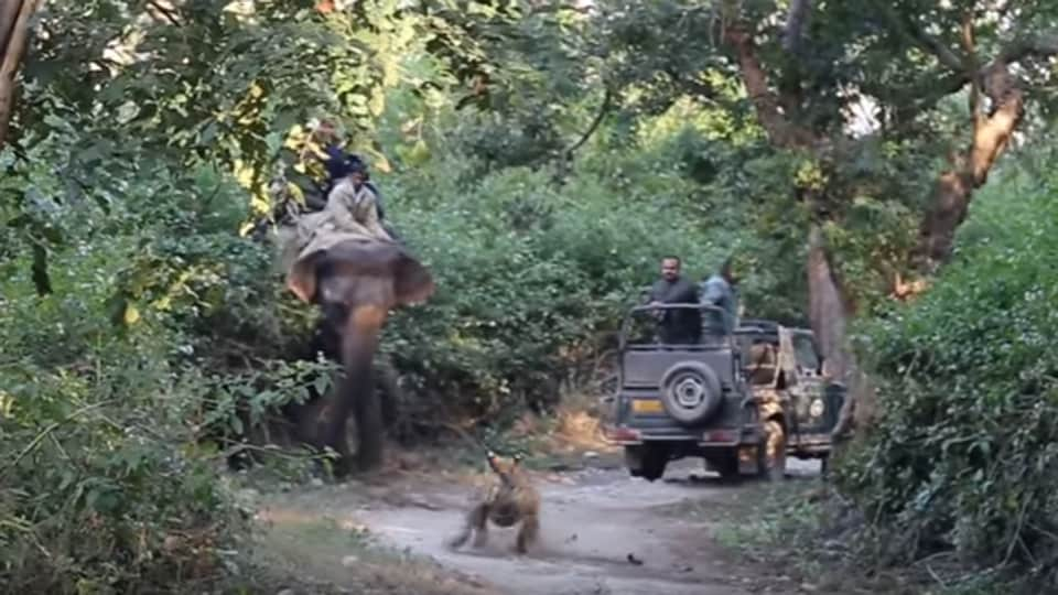 Before opening the gates for tourists this season, the authorities had put two time-lapse cameras to record violations in Dhikala zone. They had also sensitized nature guides and the 94 registered Gypsy drivers to avoid any such incidents.