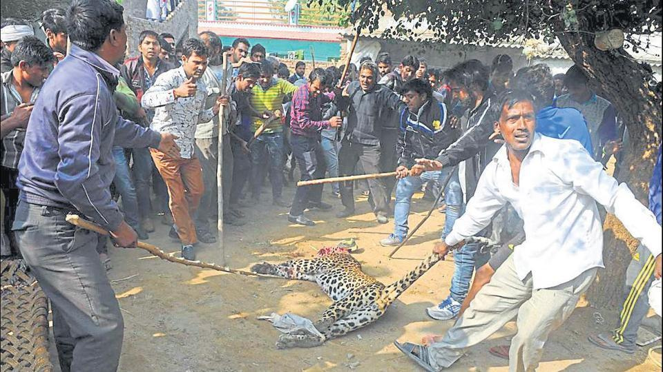 On November 24, a leopard was beaten to death by villagers in Gurgaon. People and animals are getting dangerously close to each other, which leads to rising conflict.