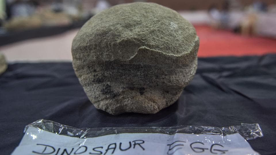 Egged on: A dinosaur egg too is on display. (SATISH BATE/HT PHOTO)