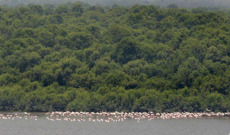 mumbai,mumbai news,mangrove destruction